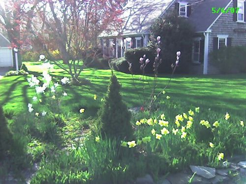 Spring in my home in Yarmouth Port, Cape Cod